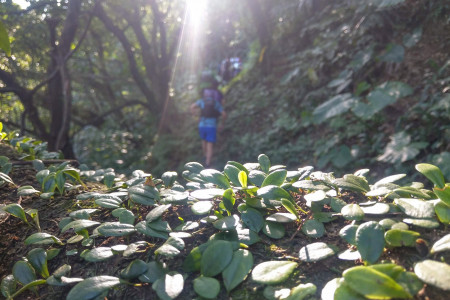 Cover image for Trail Run Meetup - Sijhih Lake BaiPao & Trails